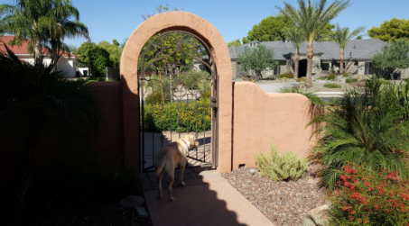 Suddenly My Dog Lunges For The Courtyard Gate!
